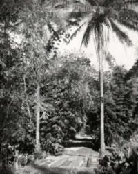 Vers une plantation de café